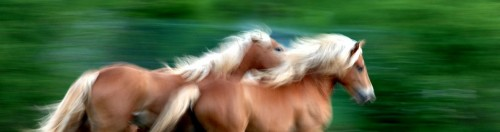 Improve the speed of your blog, just like these running horses are faster because they bleached their hair.